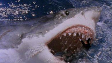 shark attack 3 megalodon